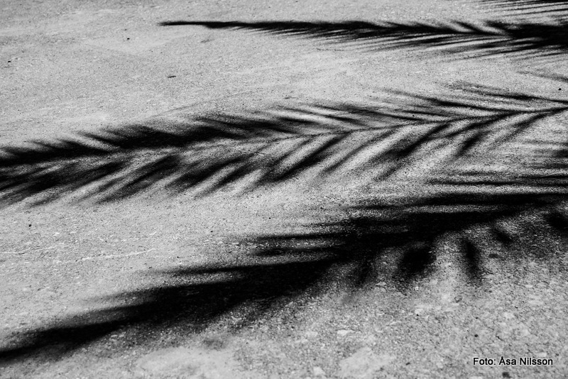 Shadows from a palm tree II.  Nikon D60, Nikon 18-55 mm, ISO 100, 1/500  s, f/7.1